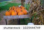 Pumpkins For Sale At Farm...