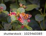 macro shot of a monarch... | Shutterstock . vector #1025460385
