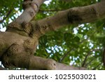 close up jungle tree trunk... | Shutterstock . vector #1025503021