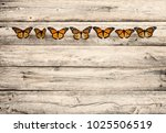 monarch butterfly insects in a... | Shutterstock . vector #1025506519