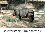 indian rhinoceros are eating in ... | Shutterstock . vector #1025509459