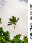 royal palm is standing along...   Shutterstock . vector #1025515384