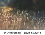 moody autumn grass in the woods | Shutterstock . vector #1025522245