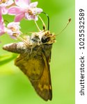 Stock photo butterfly moth on flower eating nature photography macro 1025532589