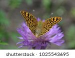a tiger butterfly sits on a... | Shutterstock . vector #1025543695