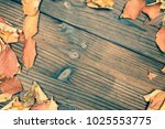 dry leaf frame on wooden... | Shutterstock . vector #1025553775