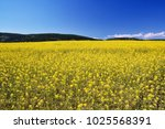 boundless spring field with... | Shutterstock . vector #1025568391