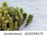 macro bunch of green sage on... | Shutterstock . vector #1025598175