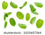 fly fresh raw mint leaves... | Shutterstock . vector #1025607364