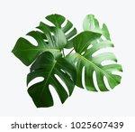 tropical botanical  leaves... | Shutterstock . vector #1025607439