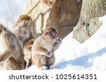 Little Monkey Sitting On The...