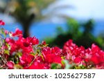 Vibrant Colors Flowers Close U...
