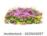 tropical plant flower bush tree ... | Shutterstock . vector #1025632057