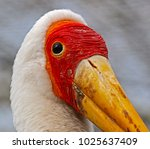 a large yellow billed stork ...   Shutterstock . vector #1025637409