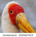 a large yellow billed stork ...   Shutterstock . vector #1025637415