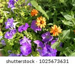 beautiful flower  flora | Shutterstock . vector #1025673631