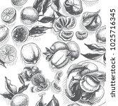 vector sketch background fruit. ... | Shutterstock .eps vector #1025716345