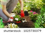 gardener woman planting flowers ... | Shutterstock . vector #1025730379