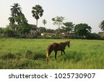 horse eating in a green meadow... | Shutterstock . vector #1025730907
