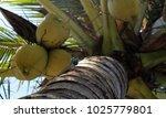 lizard on the tree | Shutterstock . vector #1025779801