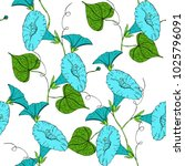 Vector Colored Pattern With...