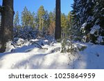 Snowy Winter Forest In The Ore...