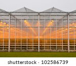 The exterior of a giant commercial glasshouse - stock photo