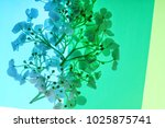 colorful shapes with flowers | Shutterstock . vector #1025875741