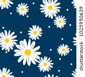 White Daisies And White Circle...