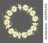 hand drawn chamomile flowers... | Shutterstock .eps vector #1025951455