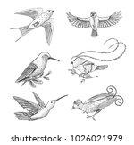 small birds of paradise  barn... | Shutterstock .eps vector #1026021979