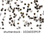 job's tears   coix lachryma... | Shutterstock . vector #1026033919