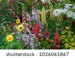 An Exotic Flower Border With A...