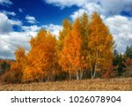 autumn day. the picturesque sky ... | Shutterstock . vector #1026078904