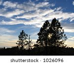 sunset and pine trees | Shutterstock . vector #1026096