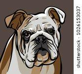dog bulldog. a sad bulldog dog...   Shutterstock .eps vector #1026153037