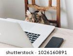 cute cat sitting on wooden...   Shutterstock . vector #1026160891