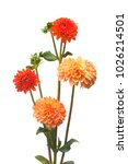 flower of beautiful orange and... | Shutterstock . vector #1026214501