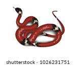 red snake adder isolated on... | Shutterstock .eps vector #1026231751