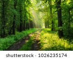 spring forest. a misty morning... | Shutterstock . vector #1026235174