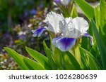 vibrant blue and white flora | Shutterstock . vector #1026280639