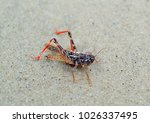 Insect Grasshopper In The Sand...