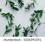lovely green leaves flowers on... | Shutterstock . vector #1026391351