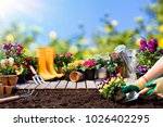 Stock photo gardening gardener planting pansy with with flowerpots and tools 1026402295