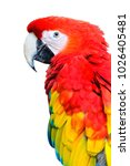 macaw parrot isolated on the... | Shutterstock . vector #1026405481