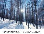 winter landscape in mountain... | Shutterstock . vector #1026406024