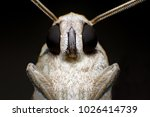 extreme macro shot gypsy moth ... | Shutterstock . vector #1026414739