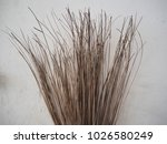 the broom made from coconut... | Shutterstock . vector #1026580249