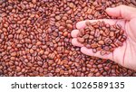 coffee beans in hand isolated | Shutterstock . vector #1026589135