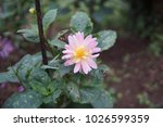 flowers bloom flora  | Shutterstock . vector #1026599359